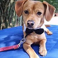 Adopt A Pet :: Indian Mills NJ - Carl - New Jersey, NJ