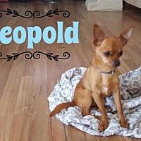 Adopt A Pet :: Leopold - Great Bend, KS