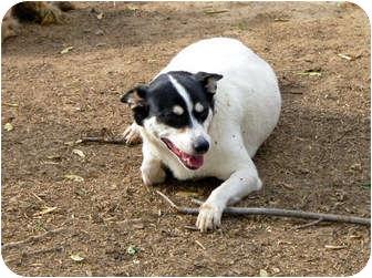 Husky Mix Dog for adoption in Clarksville, Tennessee - Jasmine