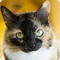 Adopt A Pet :: Analise - Chicago, IL