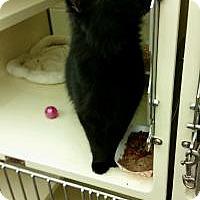 Adopt A Pet :: Kippen - Chesapeake, VA