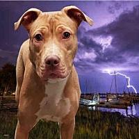Adopt A Pet :: LILLY - Fairfield, CA