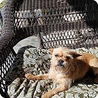 Adopt A Pet :: Jelly Bean - San Dimas, CA