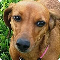 Adopt A Pet :: Penny Pontiac - Houston, TX