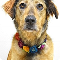 Adopt A Pet :: Willow - Dublin, CA