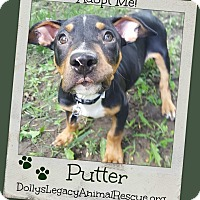 Adopt A Pet :: PUTTER - Lincoln, NE
