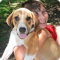 Adopt A Pet :: Summer (loves kids!!) - Westport, CT