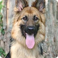 Adopt A Pet :: Peyto - Nashville, TN