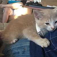 Adopt A Pet :: Polaris - San Juan Capistrano, CA