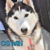 Adopt A Pet :: Oswin--Foster needed! - Carrollton, TX