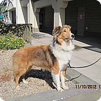 Adopt A Pet :: Simba - apache junction, AZ