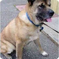 Adopt A Pet :: Kia - Hayward, CA