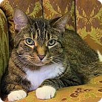 Adopt A Pet :: Harry SC - Naples, FL