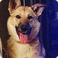 Adopt A Pet :: Shiann - Saskatoon, SK