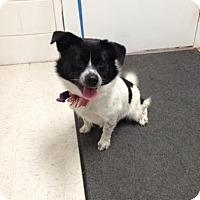 Adopt A Pet :: Buster - Lancaster, VA