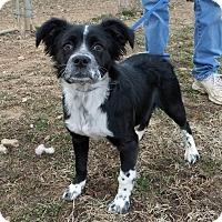 Adopt A Pet :: Oreo - Franklin, KY