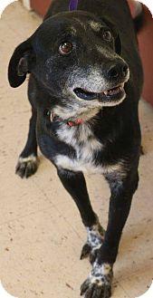 Border Collie Mix Dog for adoption in McDonough, Georgia - Patrick