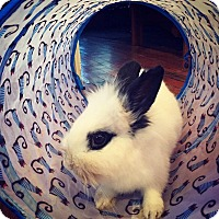 Adopt A Pet :: Po - Conshohocken, PA