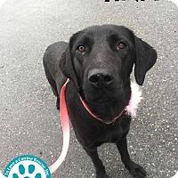 Adopt A Pet :: Tina - Kimberton, PA