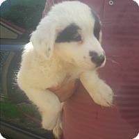 Adopt A Pet :: Butters - Staunton, VA