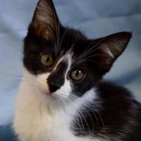Adopt A Pet :: Taffy - Salem, OH