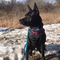 Adopt A Pet :: Razor - West Allis, WI