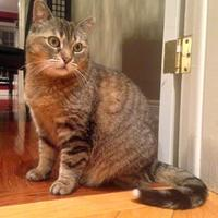 Adopt A Pet :: Little Girl - Toronto, ON