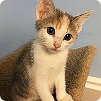 Adopt A Pet :: Pixie - N. Billerica, MA