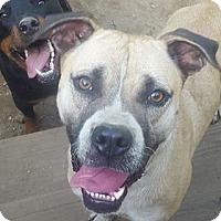 Adopt A Pet :: Lilly - Lebanon, ME
