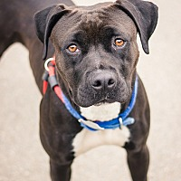 Adopt A Pet :: Silas - Berkeley, CA