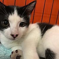 Adopt A Pet :: Minnie - Cerritos, CA