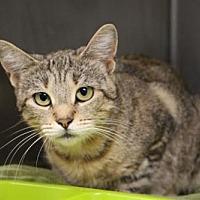 Adopt A Pet :: Nola - Batavia, OH