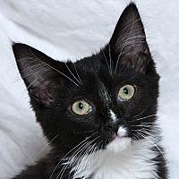 Adopt A Pet :: Rey W - Sacramento, CA