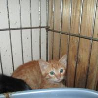 Adopt A Pet :: Frodo - Waxahachie, TX