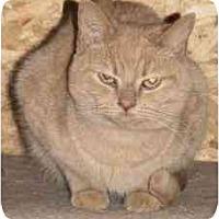 Adopt A Pet :: Sullivan - Strathmore, AB
