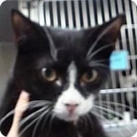 Adopt A Pet :: Bishop - St. Petersburg, FL