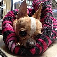 Adopt A Pet :: Linus the Brave of Heart - Poulsob, WA
