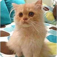 Adopt A Pet :: Crackle - Beverly Hills, CA