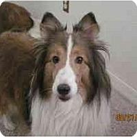 Adopt A Pet :: TASHA - apache junction, AZ