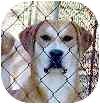 Boxer/Hound (Unknown Type) Mix Dog for adoption in Proctorville, Ohio, Ohio - Reagan