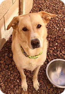 Labrador Retriever Mix Dog for adoption in Las Vegas, Nevada - Leon