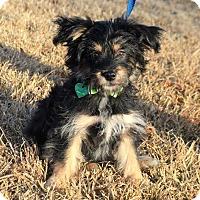Adopt A Pet :: *Milo - PENDING - Westport, CT