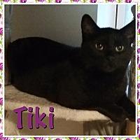 Adopt A Pet :: Tiki - Cedar Springs, MI