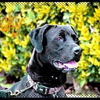Adopt A Pet :: LUCKY - Fremont, CA