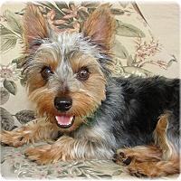 Adopt A Pet :: Bentley - Palm City, FL