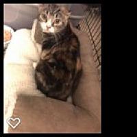 Adopt A Pet :: Saphira - Acushnet, MA