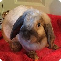 Adopt A Pet :: Jenny - Waynesboro, VA
