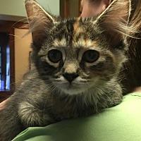 Adopt A Pet :: Aw Litter - Mocha - Williamston, MI