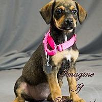 Adopt A Pet :: Ziva - Newcastle, OK
