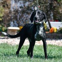 Adopt A Pet :: Yance - Ottumwa, IA